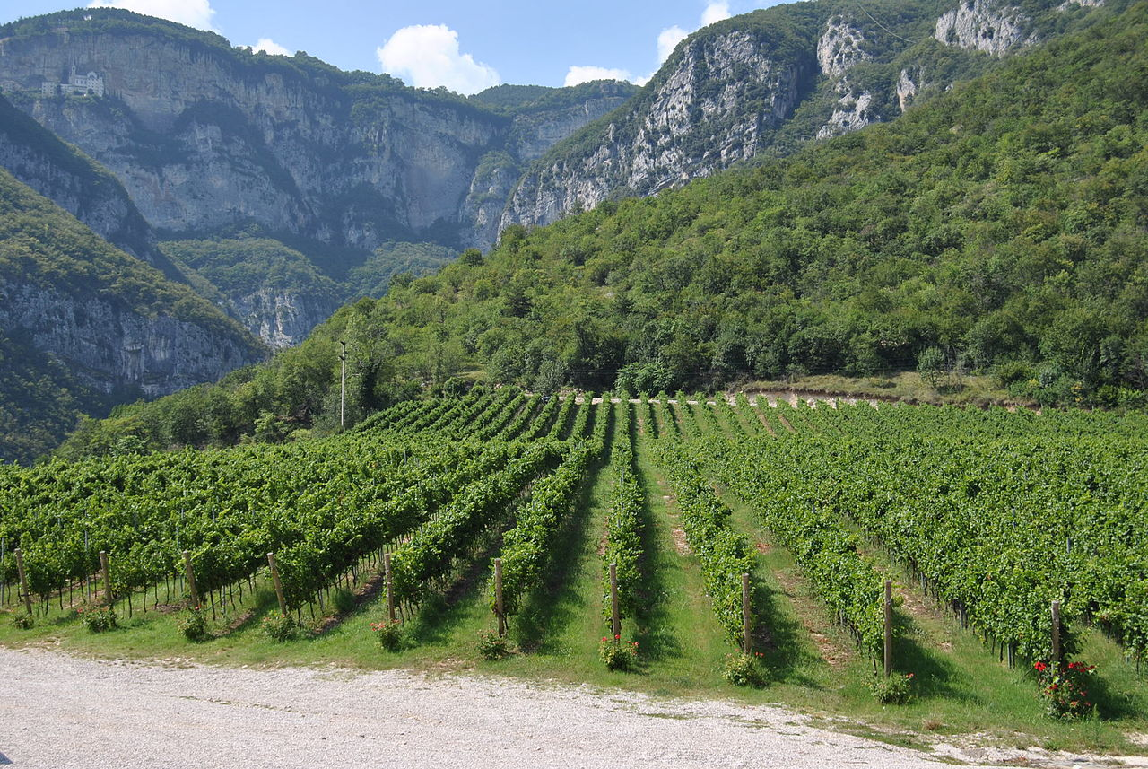 1280px-Valdadige_vineyards_in_the_Trentino-Alto_AdigeSüdtirol