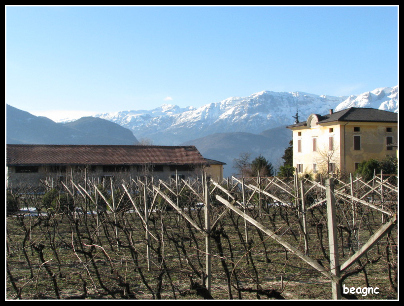 Grapevines_beside_the_Alps_View_from_Povo,_Trento,_Italy