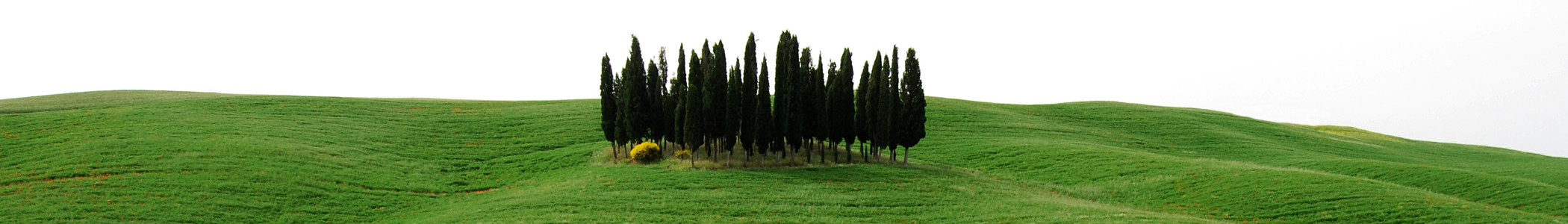 Toscana_banner_Copse_in_agricultural_fields