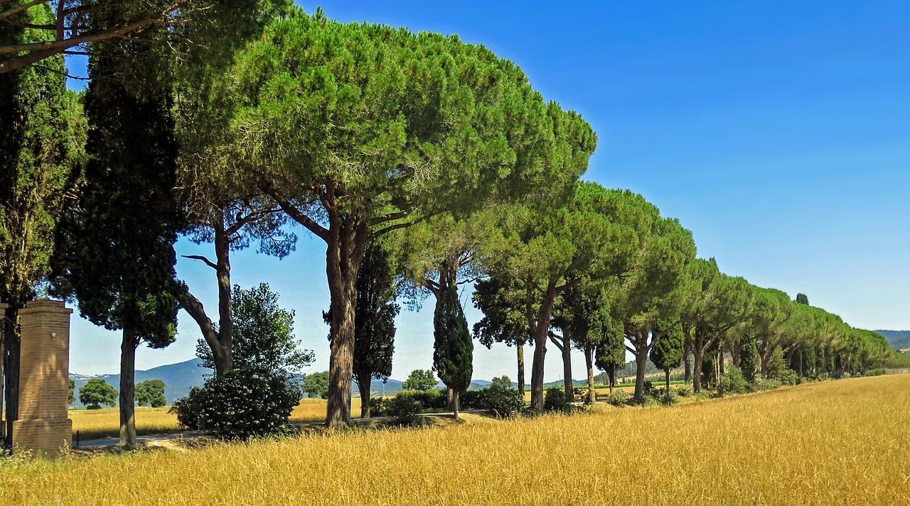 cypress-504319_1280