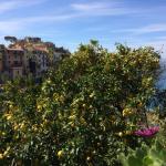 Cinque Terre März/April 2015